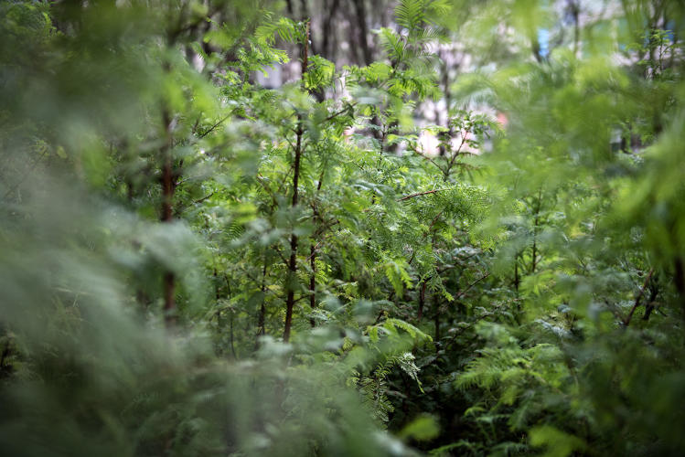 <p>Visitors are welcome to walk among the miniature Redwood forest in the middle of downtown Brooklyn.</p>