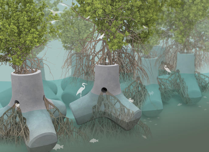 <p>Mangrove trees, which can grow in brackish water along coasts, are a natural defense against coastal erosion.</p>