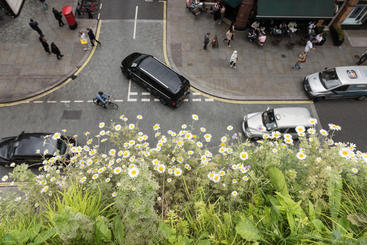 <p>Noise pollution from the construction site it cloaks could be reduced by 10 decibels, and the plants could also clean the air.</p>