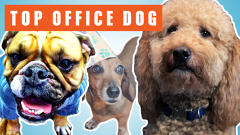Vote Now: America's Next Top Office Dog Has Over 100 Dogs And They Are All Adorable