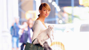 Taylor Swift Carries Her Cat Around The City--So We Tried It