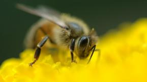 When Trying To Attract Customers, Consider The Habits Of The Honeybee