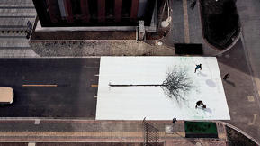 Amazing Interactive Street Art Turns Pedestrian Footsteps Into The Leaves Of Trees