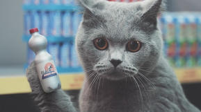 How To Make An Insanely Awesome German Supermarket Ad With Shopping Cats