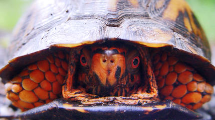 How Treating Your Employees Like Turtles Can Smother Innovation