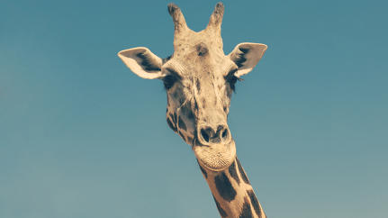 Delta Air Lines Loses the World Cup: What Do Giraffes Have To Do With Ghana?