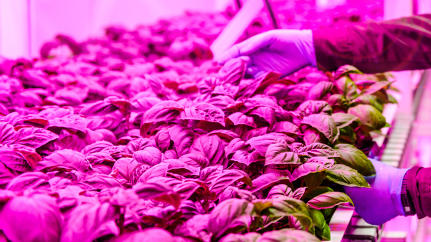 Vertical Farms Will Be Big, But For Whom?